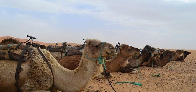 MARRUECOS SAHARA TOUR